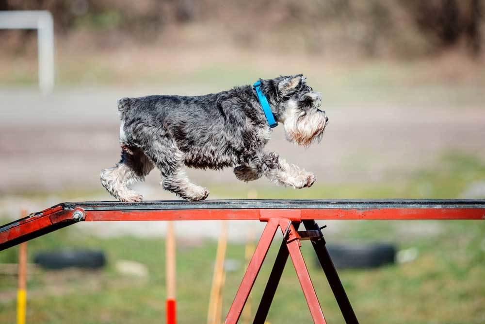 dog walking across platform