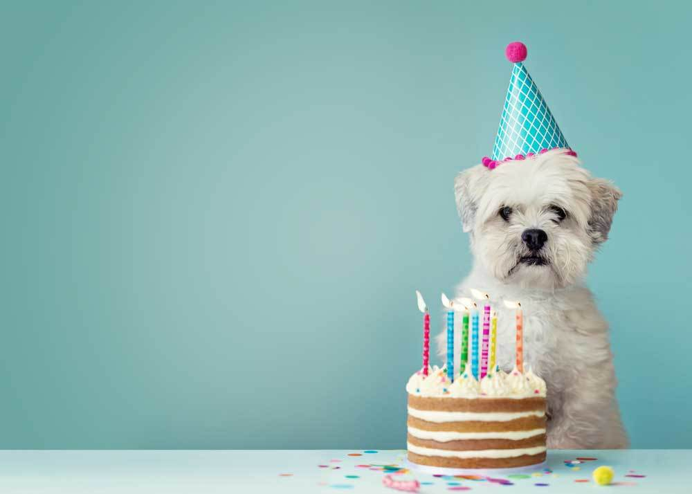Small white dog with party hat and birthday cake on blue background