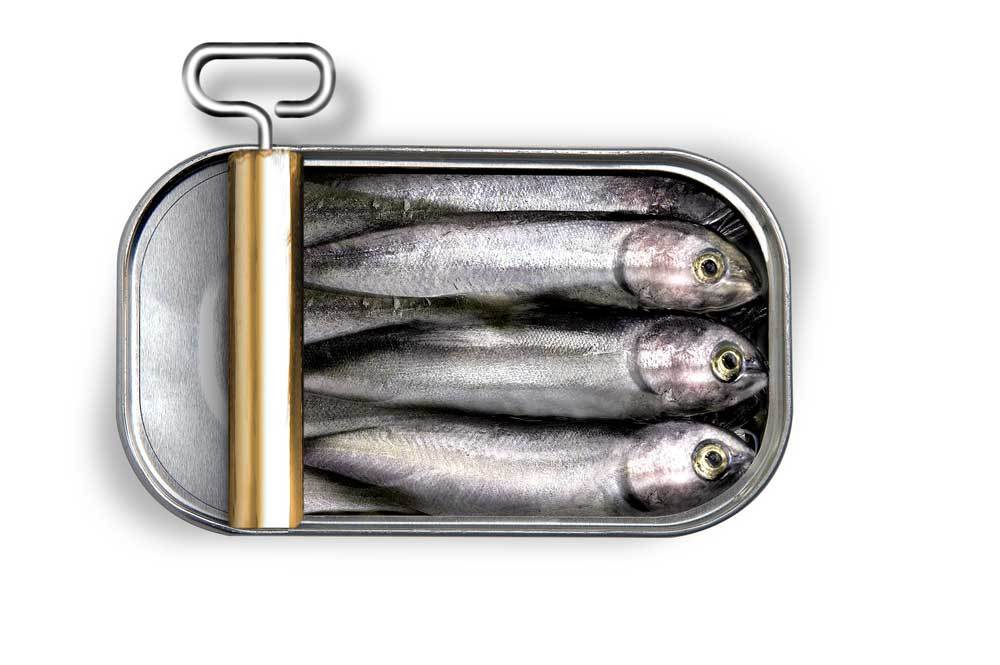 open can of Sardines on white background