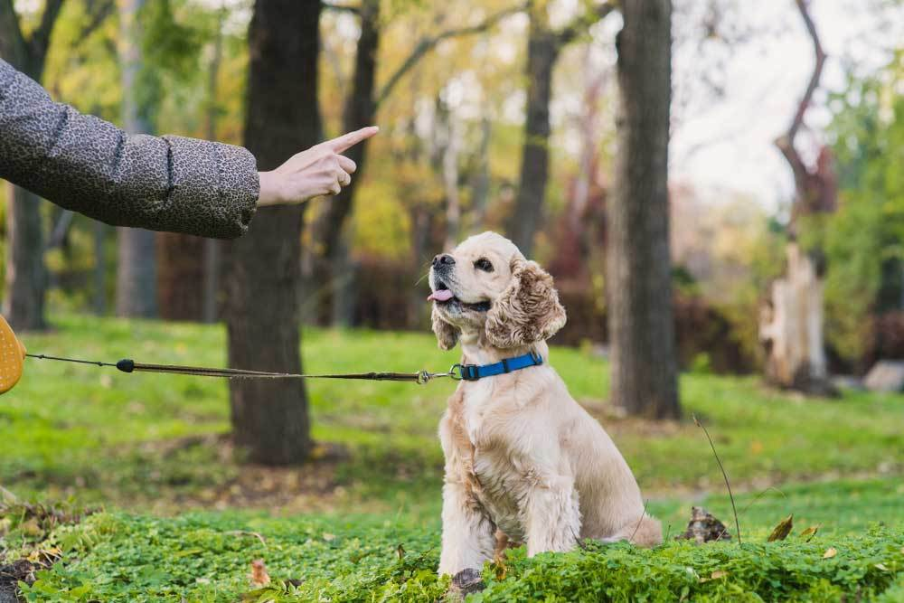 Owner with one finger extended training dog in park