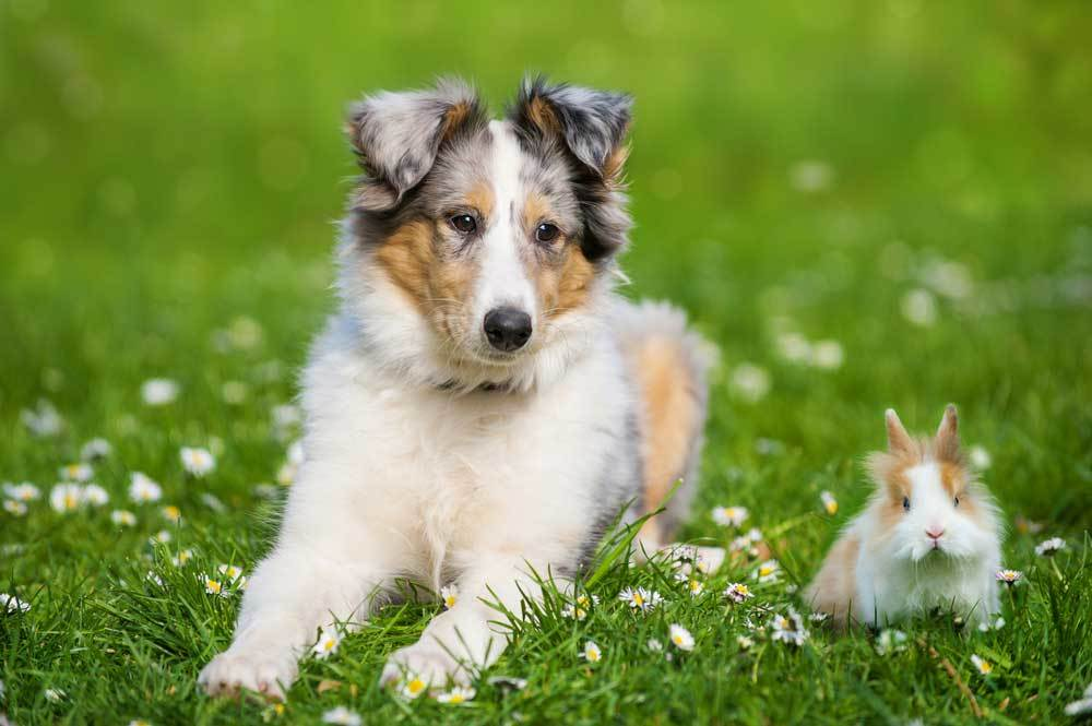 dog sitting in grassy field with rabbit