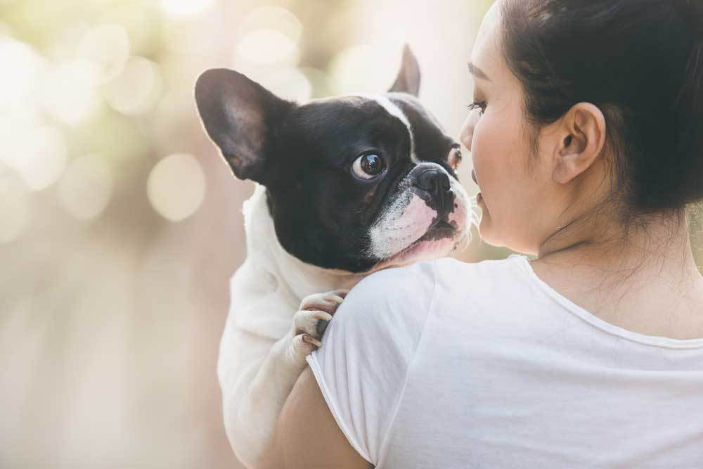 French Bulldog being hugged by a woman