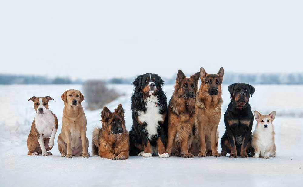 Group of dogs sitting side by side in the snow