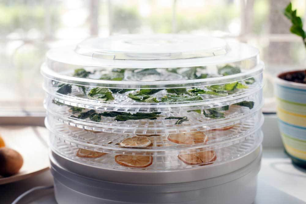 food dehydrator with fruit and herbs on trays in front of kitchen window