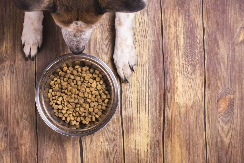 overhead view of dog looking into dog bowl of food on wooden floor