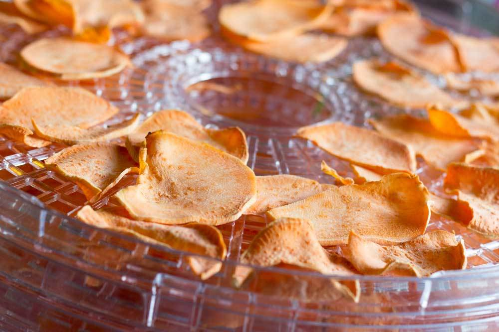 close up of sweet potato chips on a food dehydrator tray