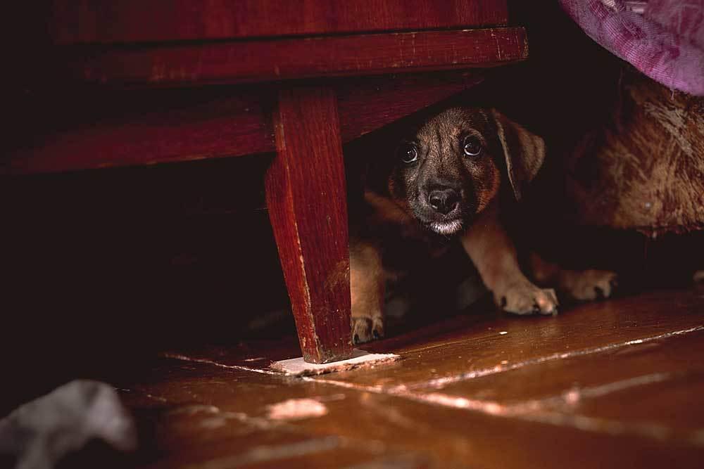 puppy cowering under dresser