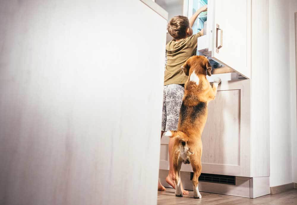 Dog and Child looking into refrigerator