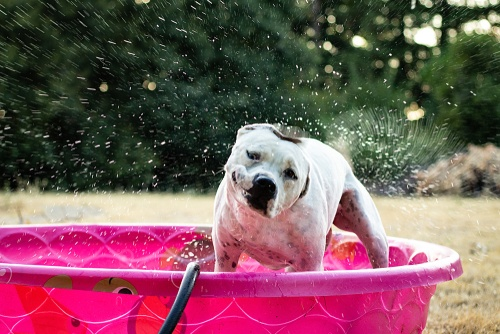 Dog in pink pool
