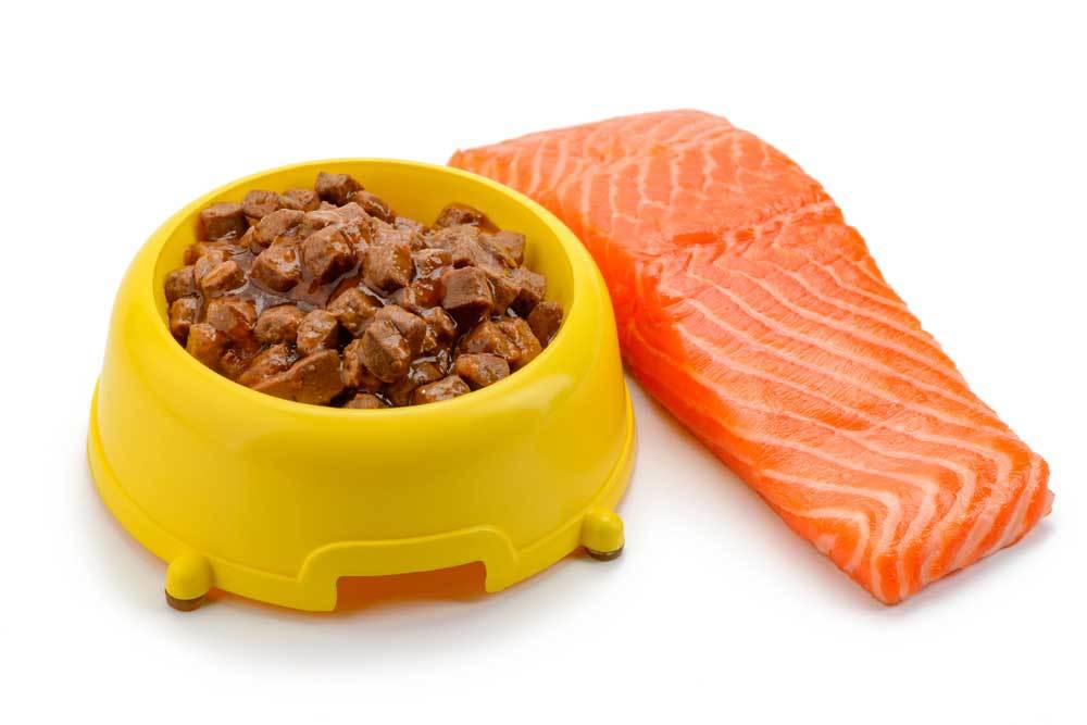 Bowl of wet dog food next to a salmon filet on a white background