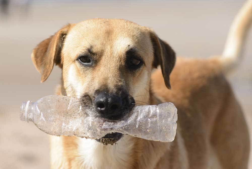 Dog with empty plastic water bottle in mouth