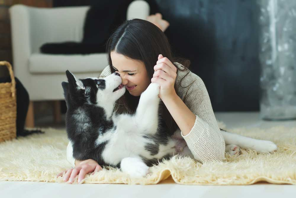 Woman playing with husky puppy on carpet