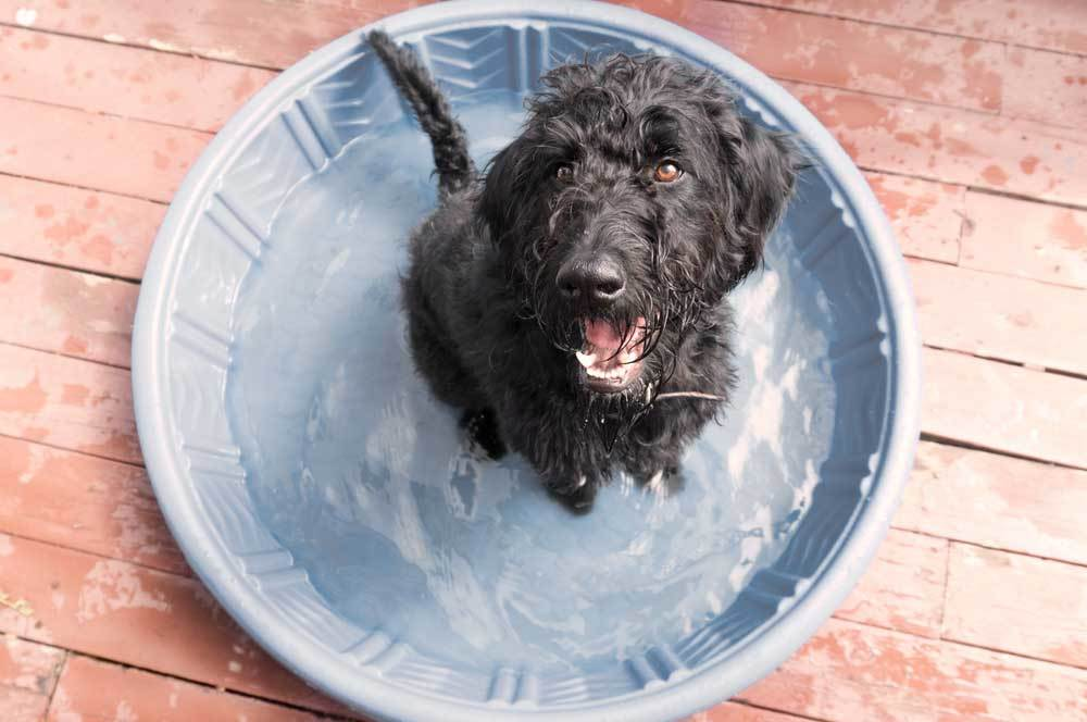 over head view of a furry black dog sitting in blue kiddie pool on a deck