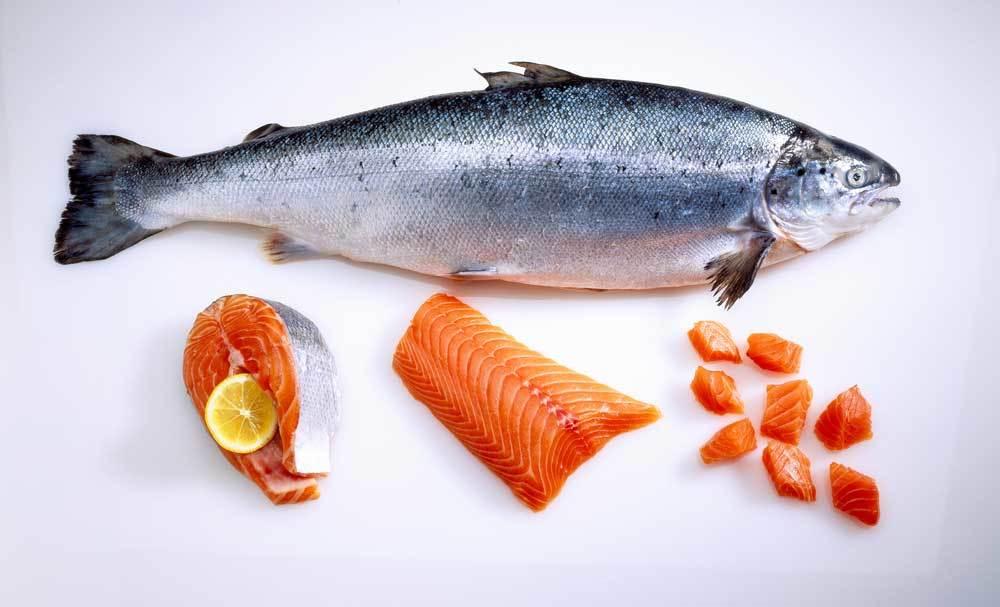 Whole salmon with salmon steak, salmon fillet, and salmon chunks, on white background
