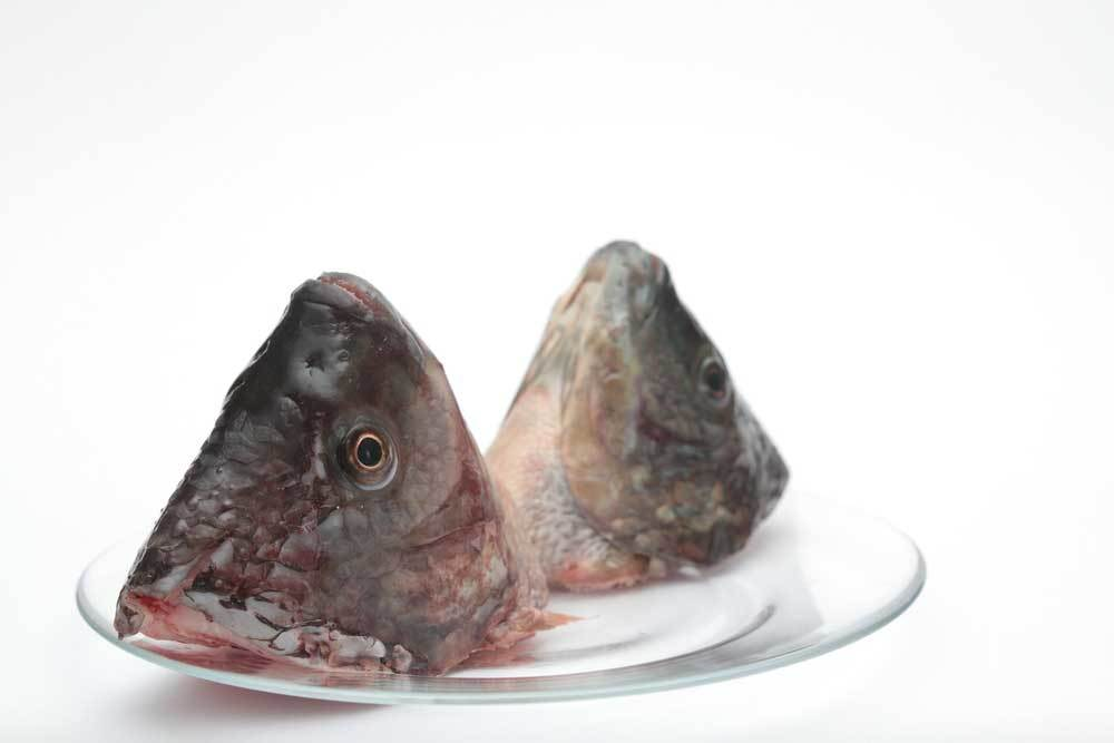 2 fish heads on a glass plate