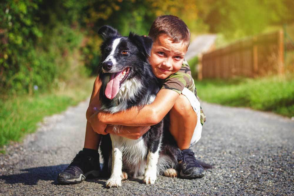 Collie being hugged by young boy on rock covered path