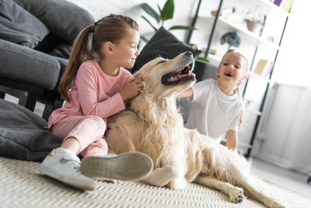 Golden Retriever playing with 2 small girls in living room