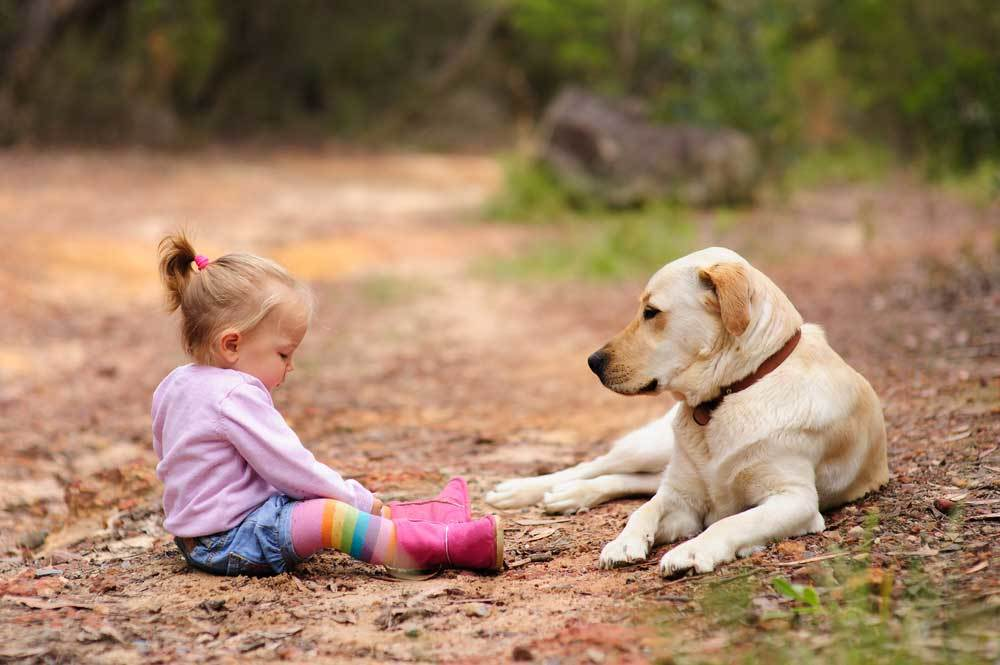 Labrador Retriever laying with toddler girl on dirt path