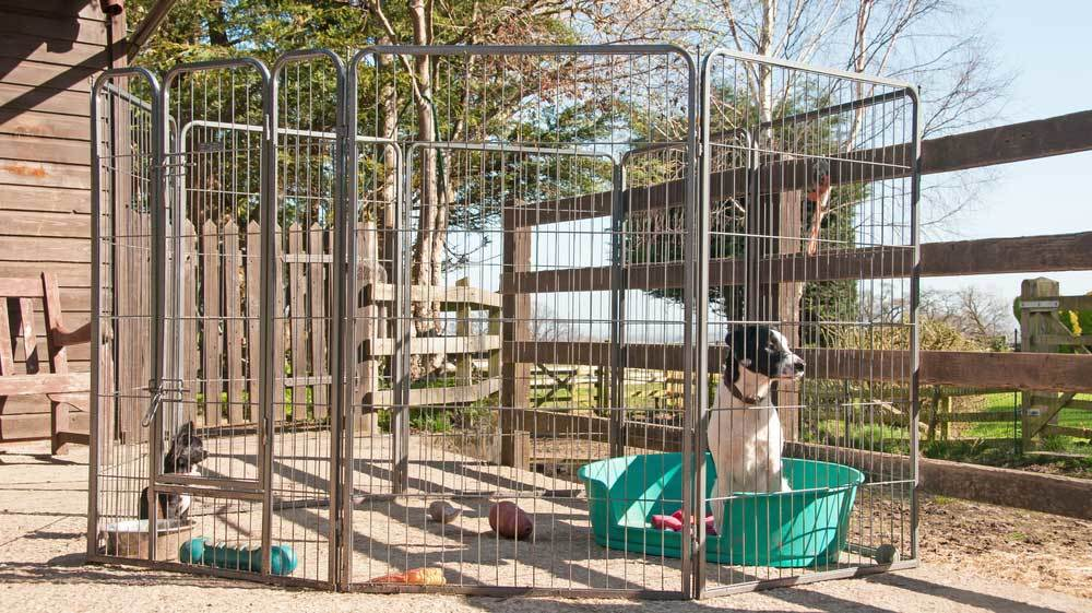 dogs in outdoor Tall Dog playpen set up on deck.