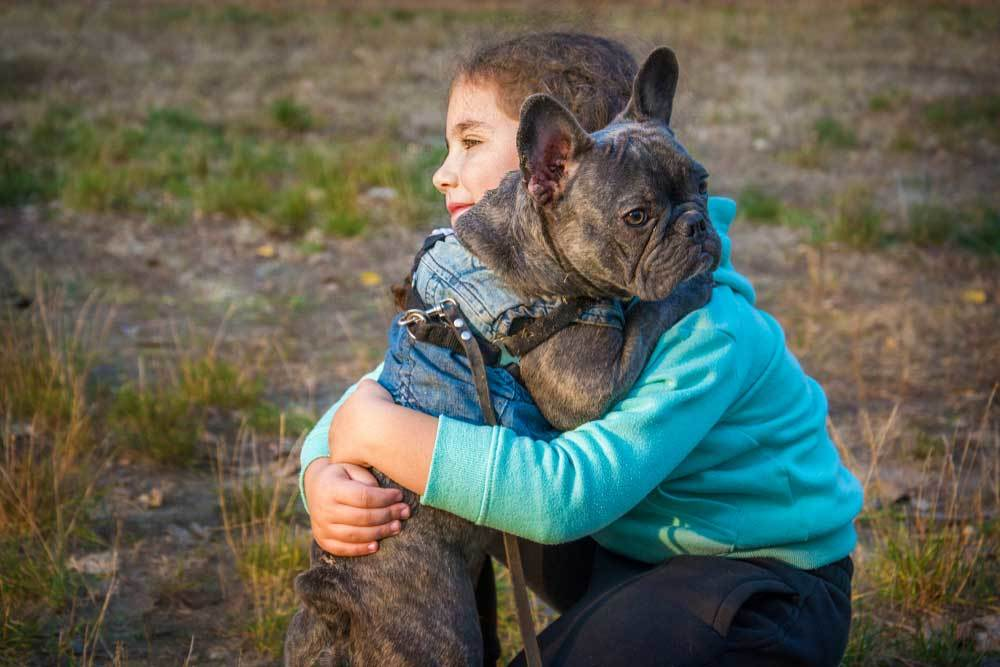Bulldog being hugged by a child in a field