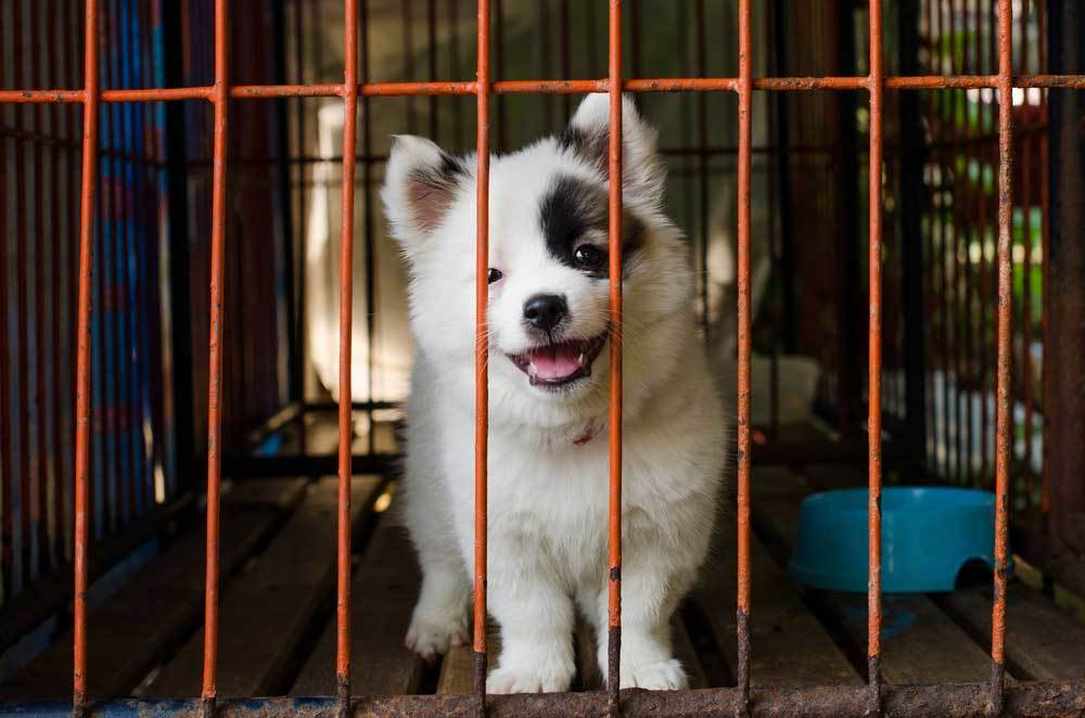 fuzzy puppy in a dog crate