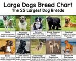 large dog breed chart