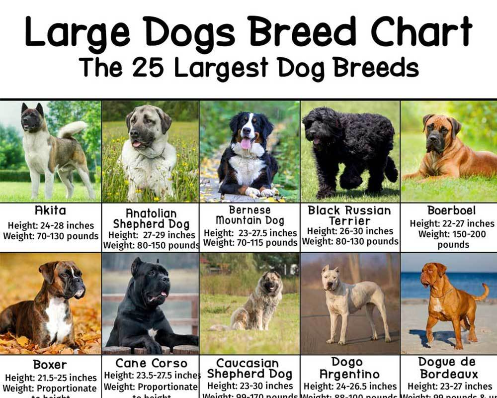 Dog Breeds Pictures And Names Chart