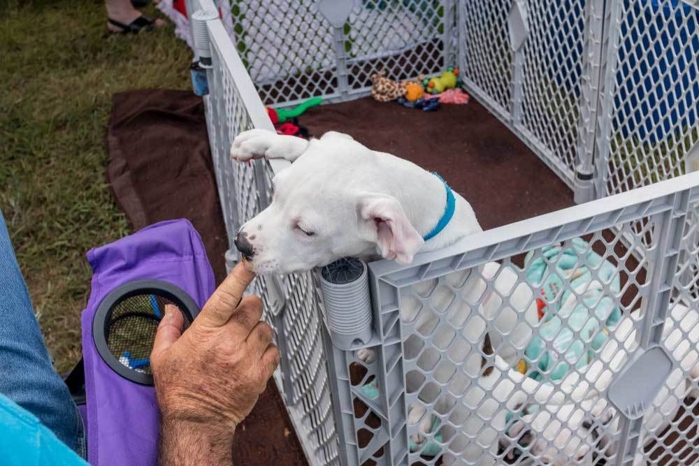 white puppy in an playpen outside sitting next to man in a chair