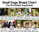small dog breed chart thumbnail