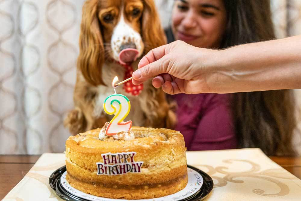 Person lighting candle on dog's birthday cake