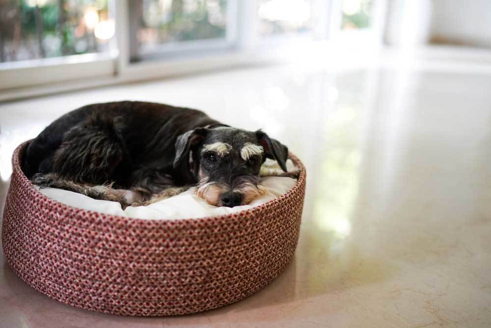 Black and tan dog laying in dog bed