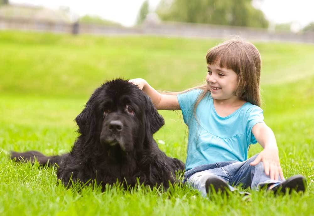 Newfoundland sitting with young girl in  grass