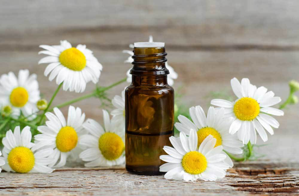 Roman Chamomile  flowers and essential oil on wood background