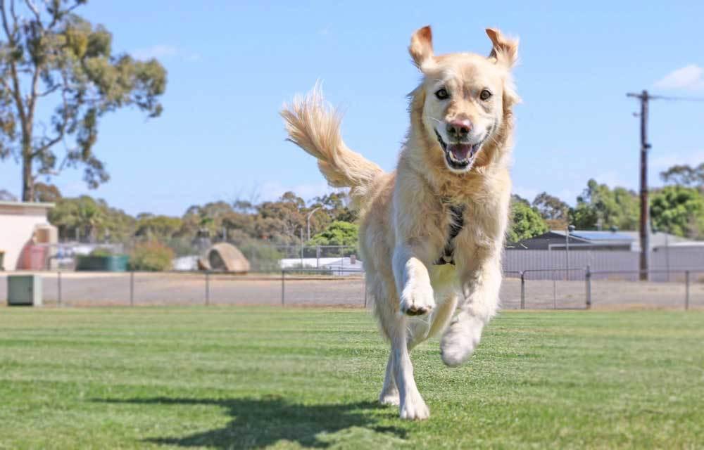 dog jumping a yard