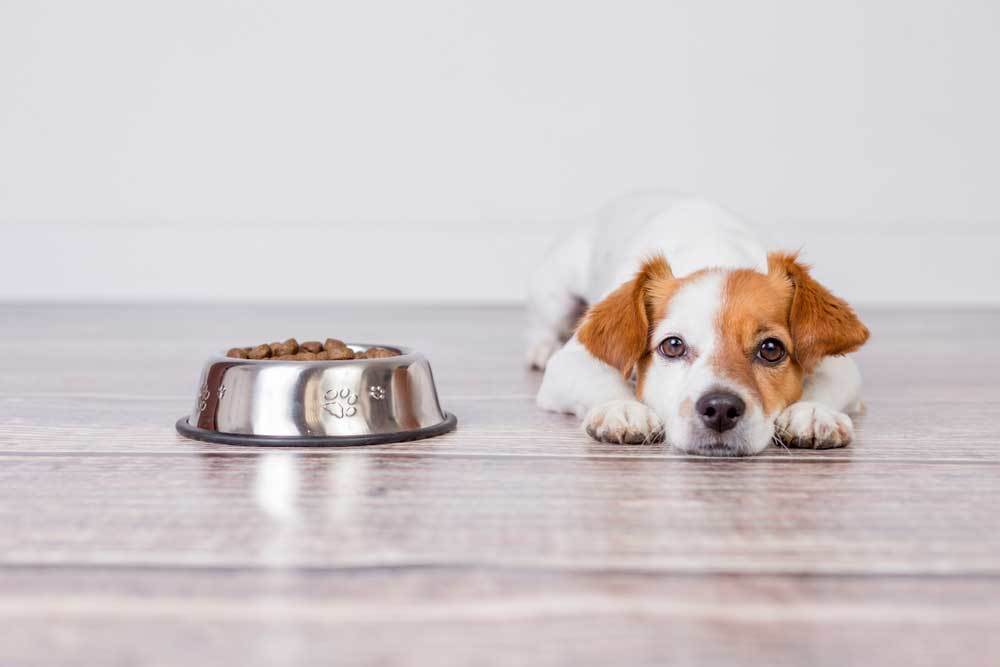 puppy laying down next to full food bowl
