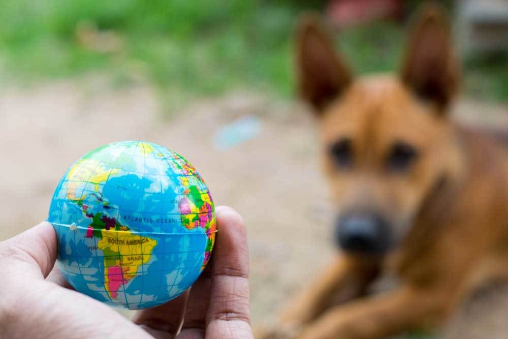 Hand holding a small globe with a blurred dog in the background.