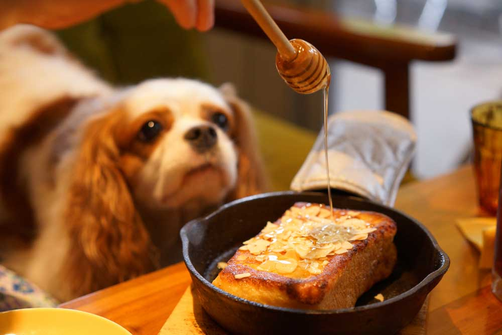 dog watching honey being drizzled over cake