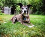 Senior dog laying in grass