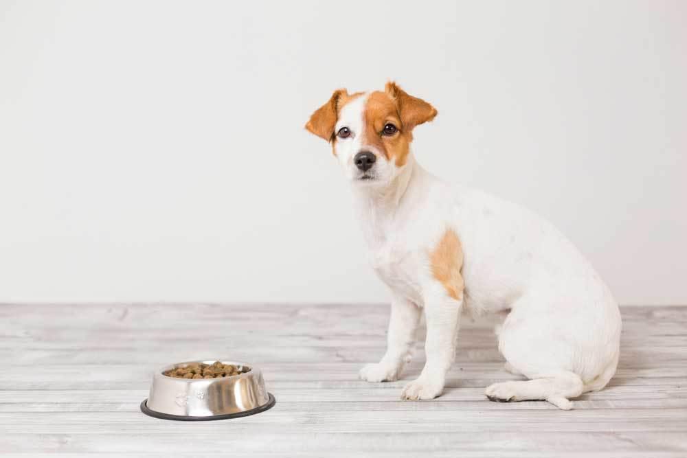 Dog sitting next to full food bowl