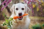 Dog with carrot in mouth standing under tree with purple flours