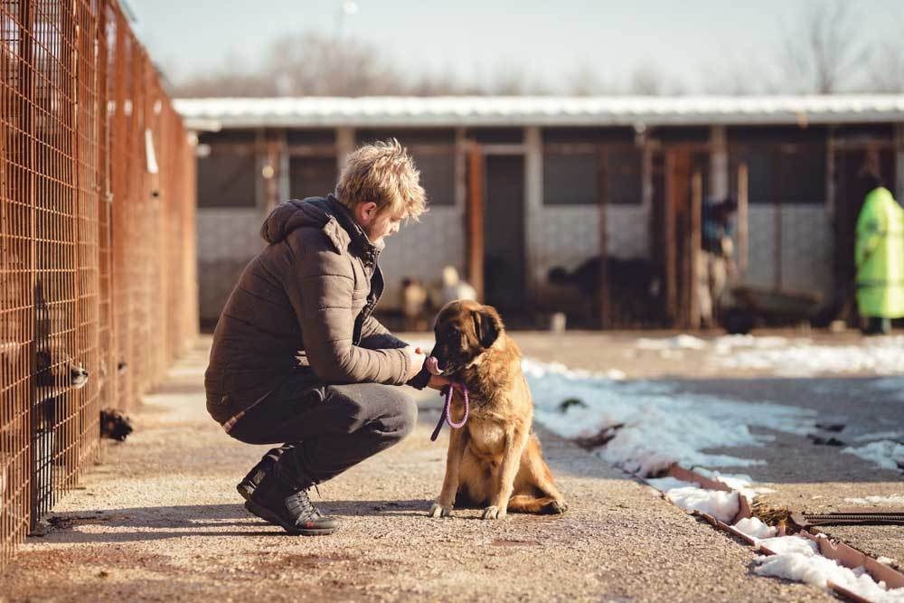 Man kneeling with dog on leash in pet shelter yard.