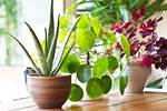 House plants on a table next to a window