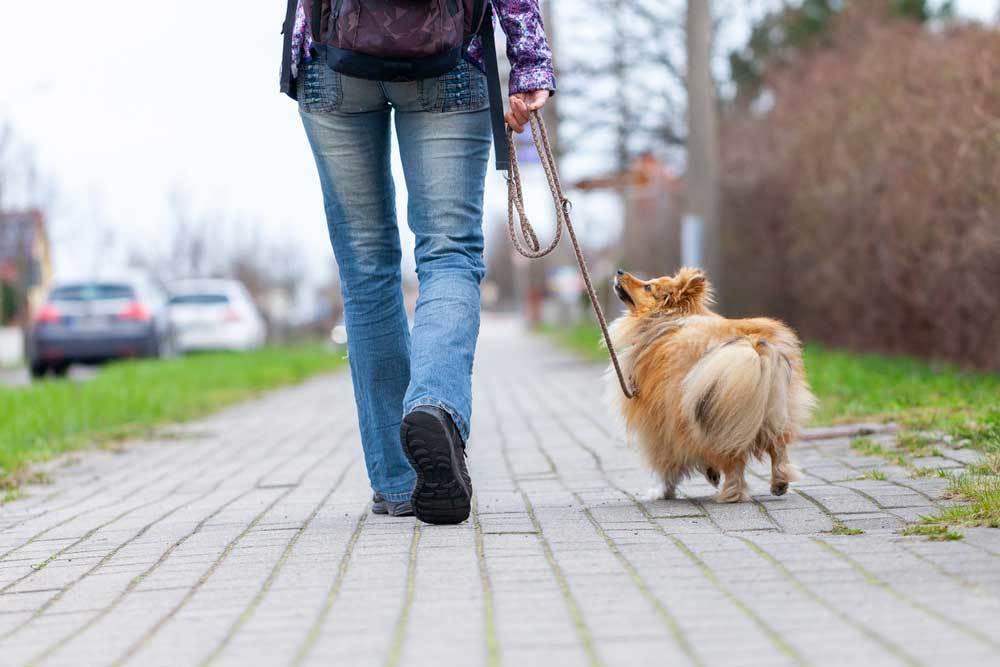 Rear view of woman walking a dog on a leash on a brick sidewalk