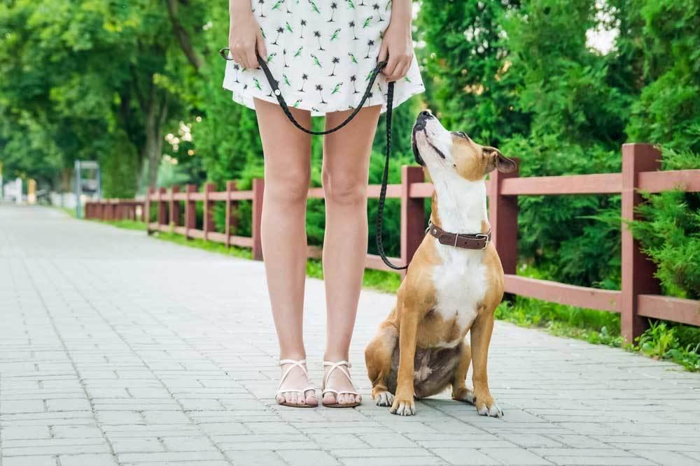Dog on leash sitting at woman's feet on a brick sidewalk