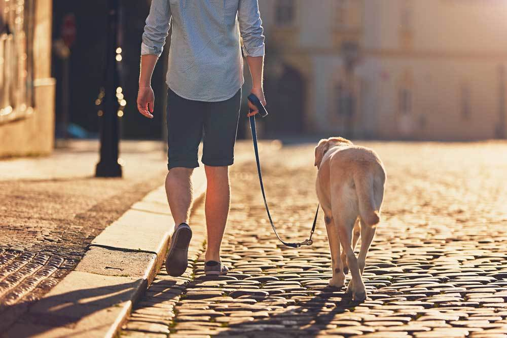 rear view of a man walking his dog on a cobblestone street