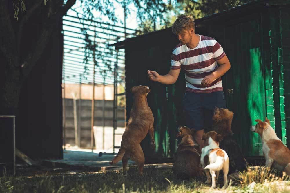 Man giving treats to pack of sitting dogs outside under shade of trees