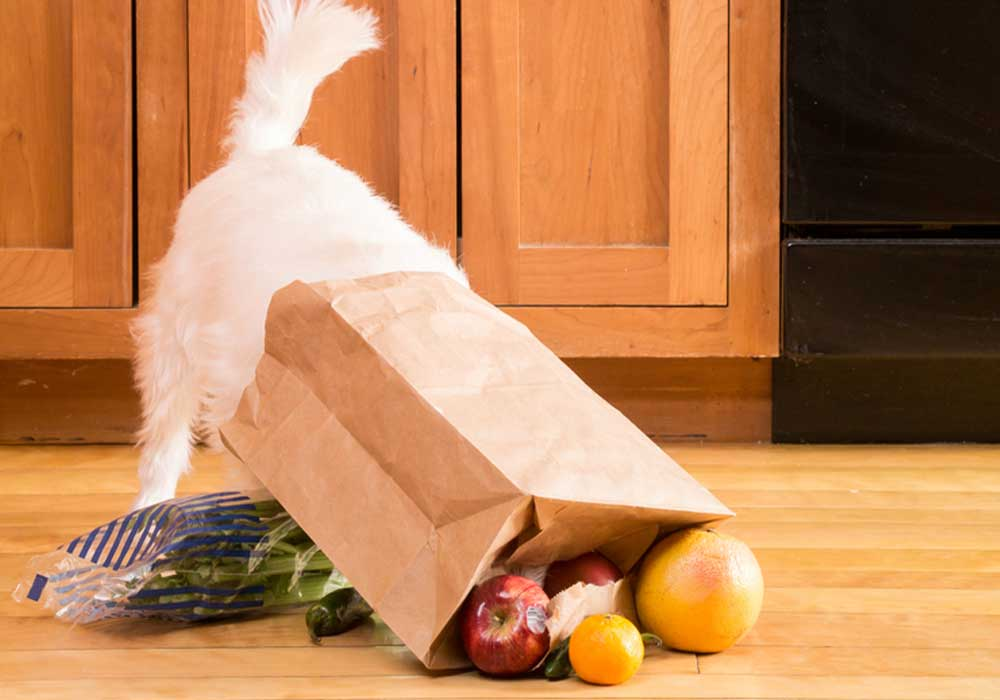 White fluffy dog with head in brown shopping bag surrounded by fruits and vegetables