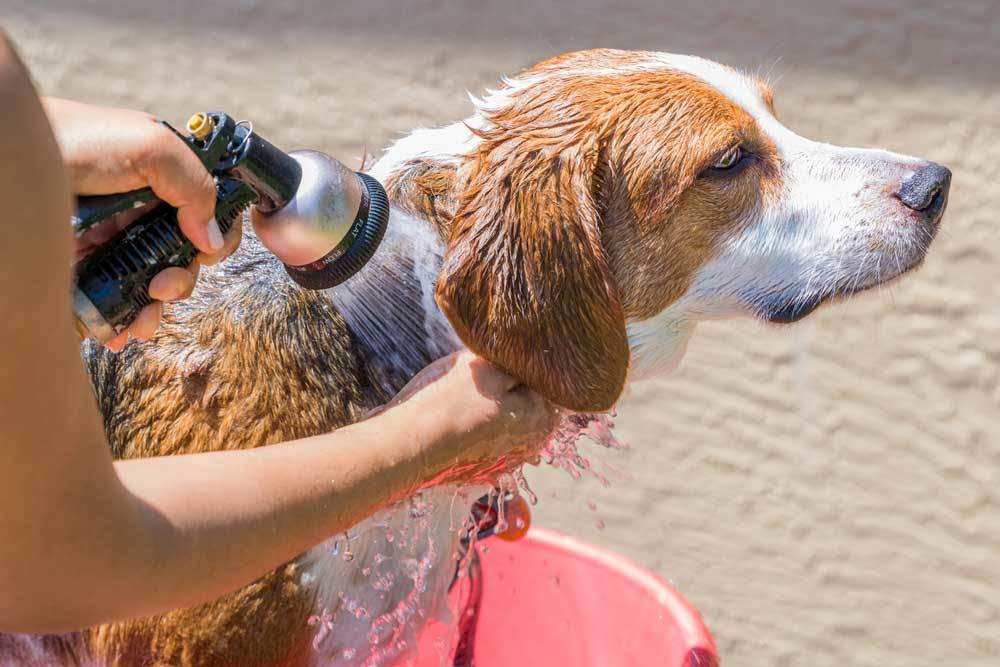 dog being rinsed with a water hose in a kiddy pool
