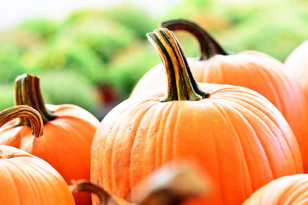 closeup of pumpkins with stems