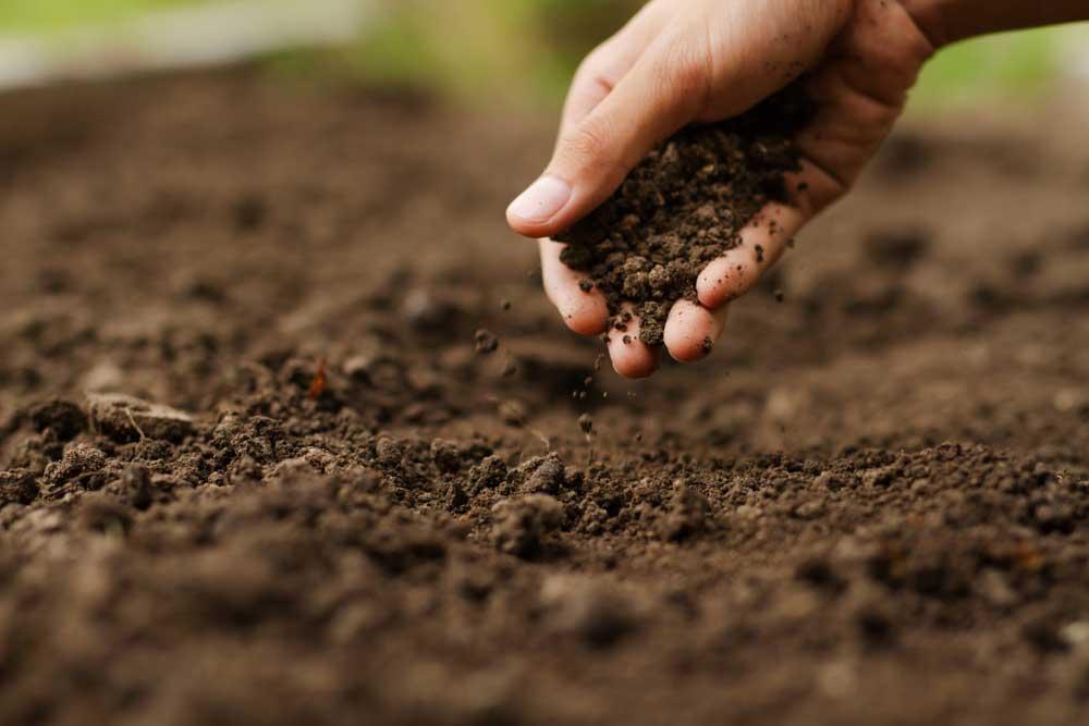 Human hand spreading soil